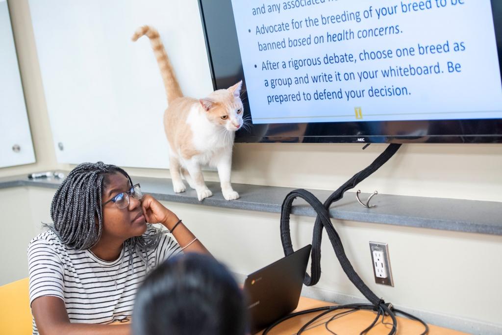 Milo, the cat, wandering the classroom