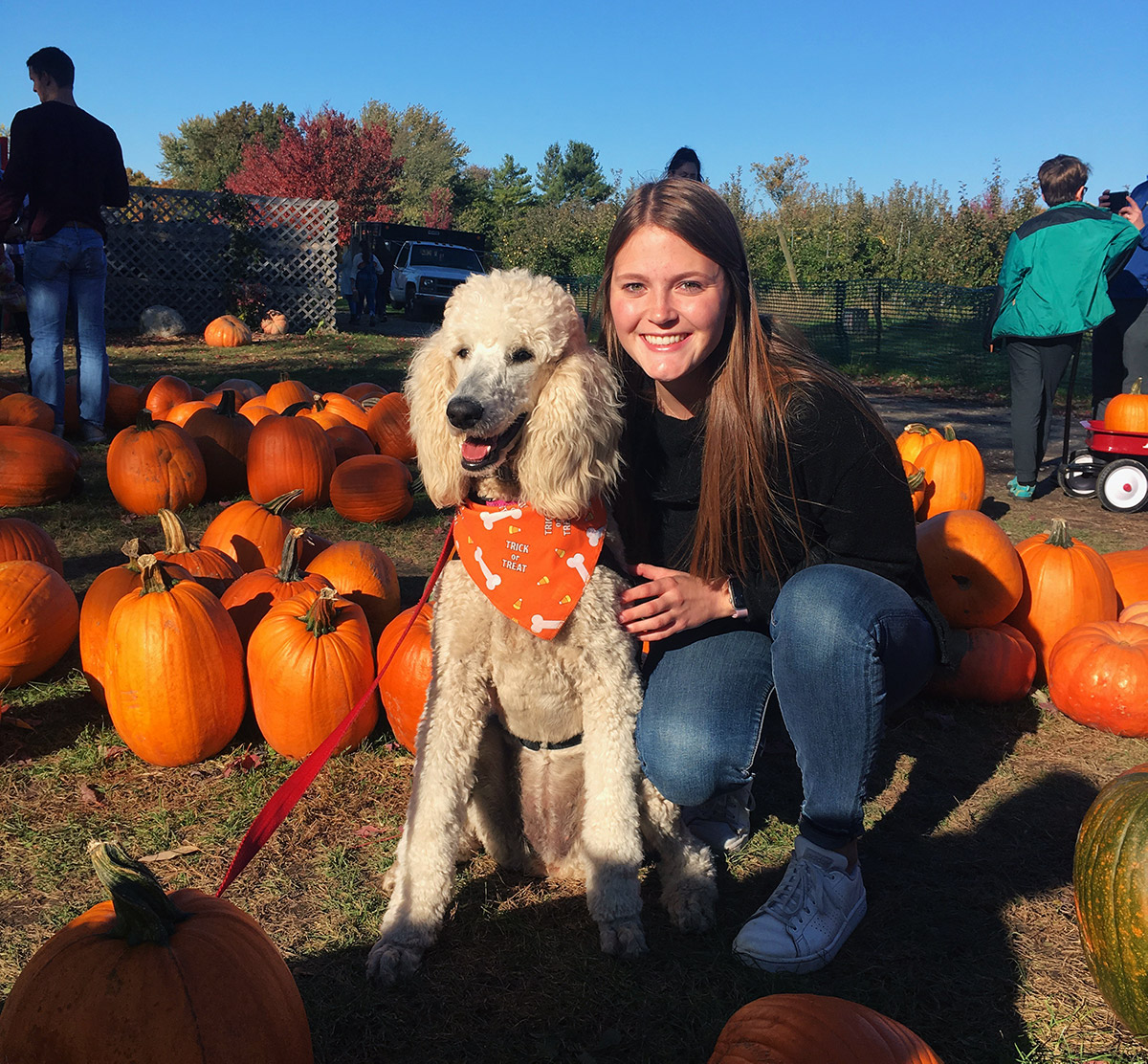 Kate poses with an Illini Service Dog surrounded by pumpkins at Curtis Orchard